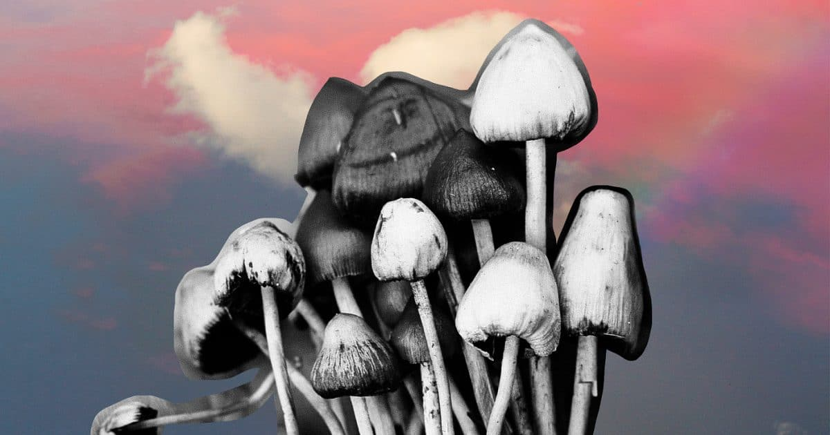 DoubleBlind: Mushrooms in front of a beautiful cloudy sky. In this article, Doubleblind explores Aeruginascin