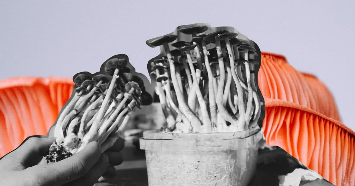 DoubleBlind: Home Grown Psychedelic Mushrooms. In this article, Doubleblind explains why one should grow their own mushrooms.