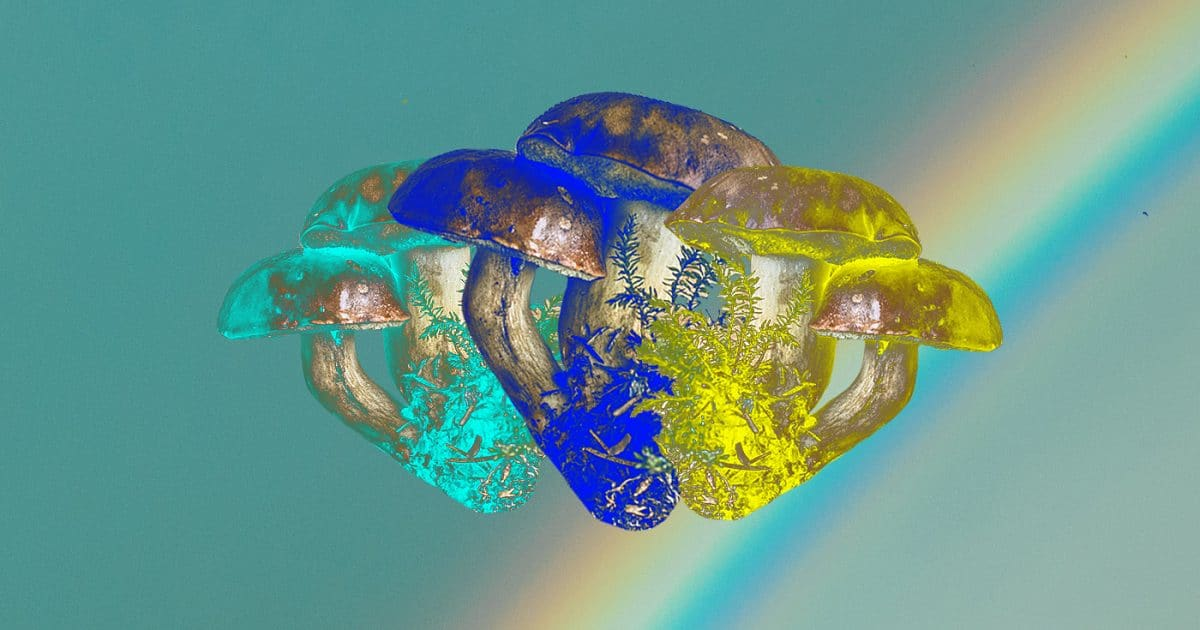 Doubleblind: Three medicinal mushrooms in three different colours overlayed on top of a rainbow.