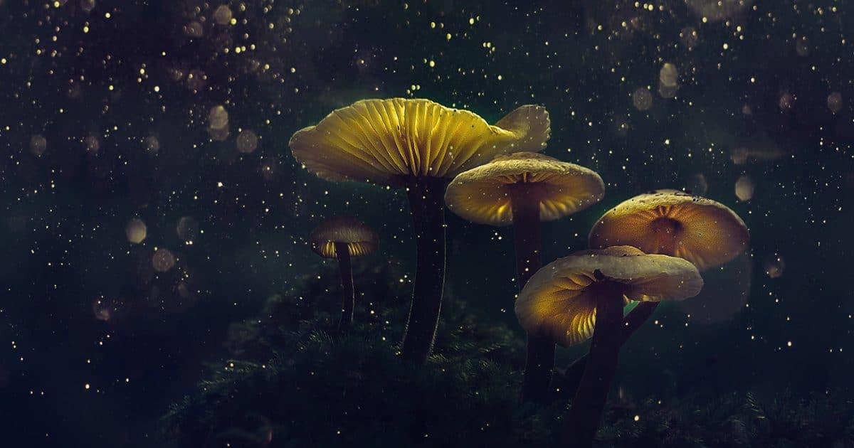 Glowing mushrooms