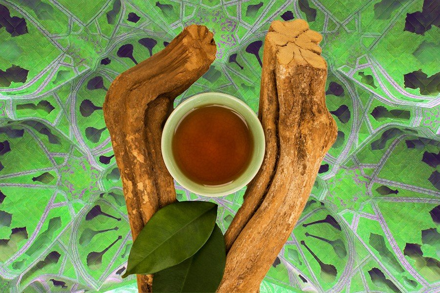 DoubleBlind: Image of ayahuasca brew and Banisteriopsis caapi plant on green background.