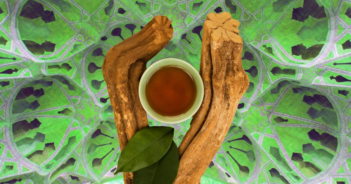 ayahuasca brew and Banisteriopsis caapi plant