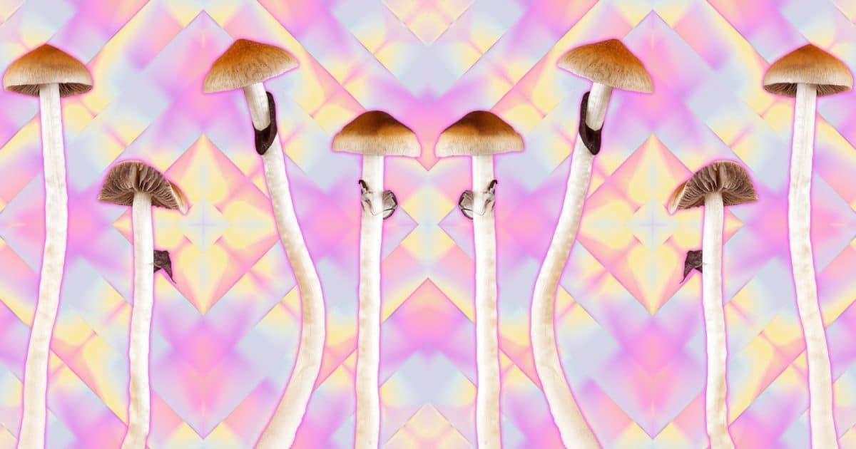 Gold cap shrooms