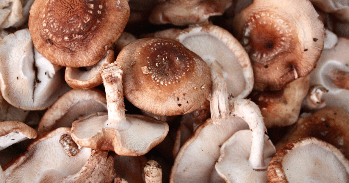 DoubleBlind: Image of a pile of mushrooms. In this article, DoubleBlind explores the different ways to properly store psychedelic, medicinal, and gourmet mushrooms.