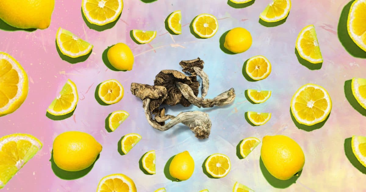 DoubleBlind: Image of lemons in a cirlce around psilocybin mushrooms. In this article, DoubleBlind explore lemon tekking, a way of consuming shrooms.