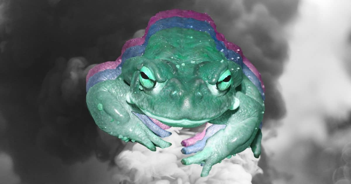 DoubleBlind: Image of Bufo Alvarius on smokey background. In this article, DoubleBlind explores 5-meo-dmt extracted from a toad versus synthetic.