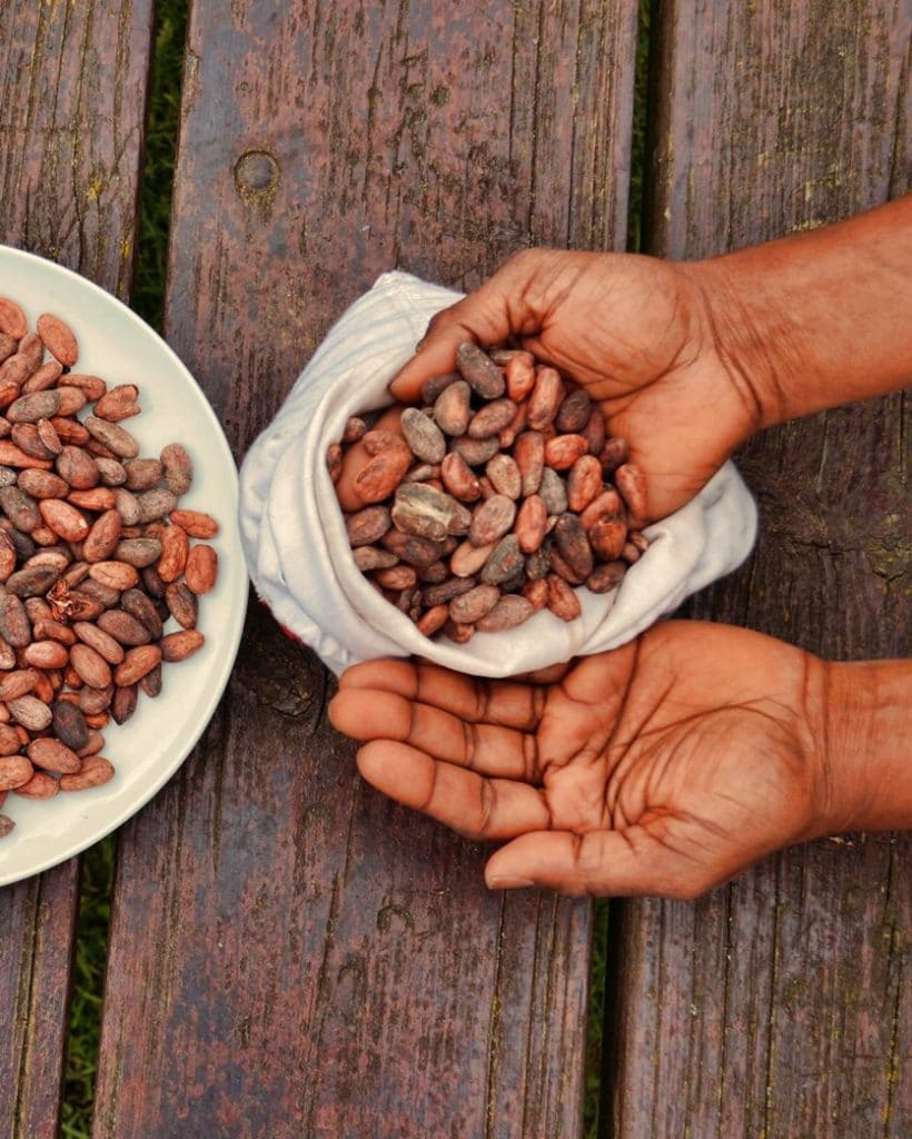 DoubleBlind: Image of hands holding cacao beans in a bag next to a plate of cacao beans. In this article, DoubleBlind explores the history of sacred cacao and its place in Western culture.