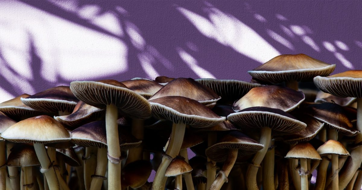 DoubleBlind: Image of psilocybin shrooms on shadowed background. In this article, DoubleBlind explores why magic mushrooms are illegal.