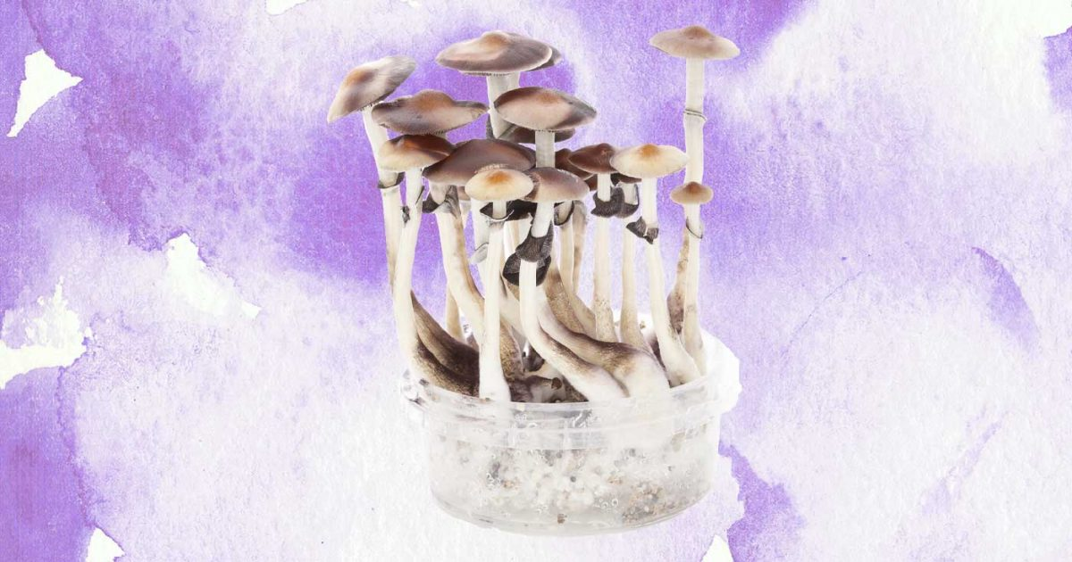DoubleBlind: Image of psilocybin mushrooms on watercolor background. In this article, DoubleBlind explores magic mushroom growing kits.