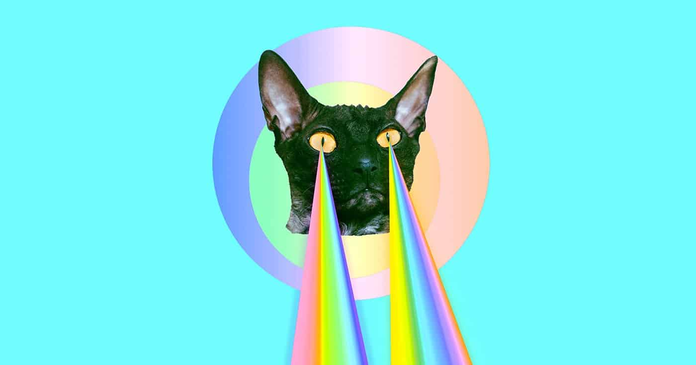 DoubleBlind: Collage of cat with rainbow lasers. In this article, DoubleBlind explores