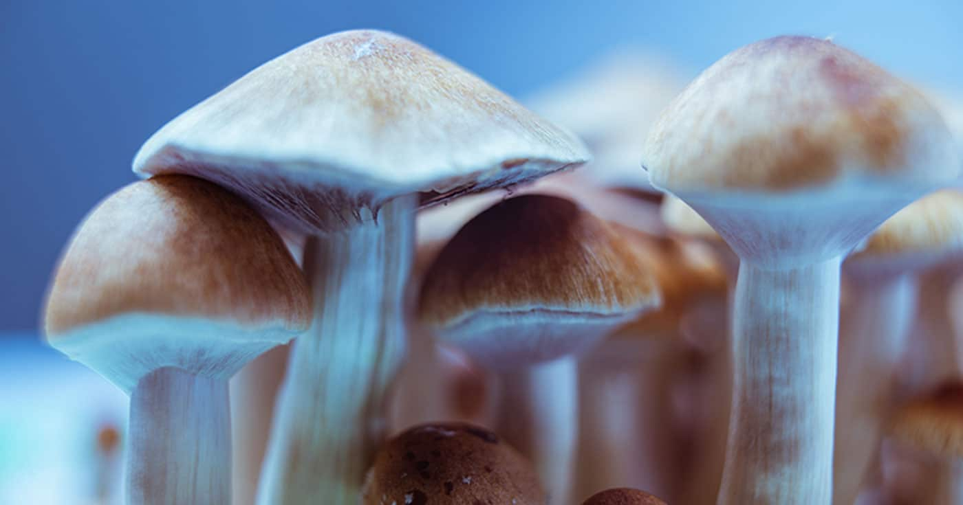 DoubleBlind: Image of psilocybin mushrooms. In this article, DoubleBlind reports on Massachusetts voting on a bill to decriminalize all entheogenic plants and fungi in the state.