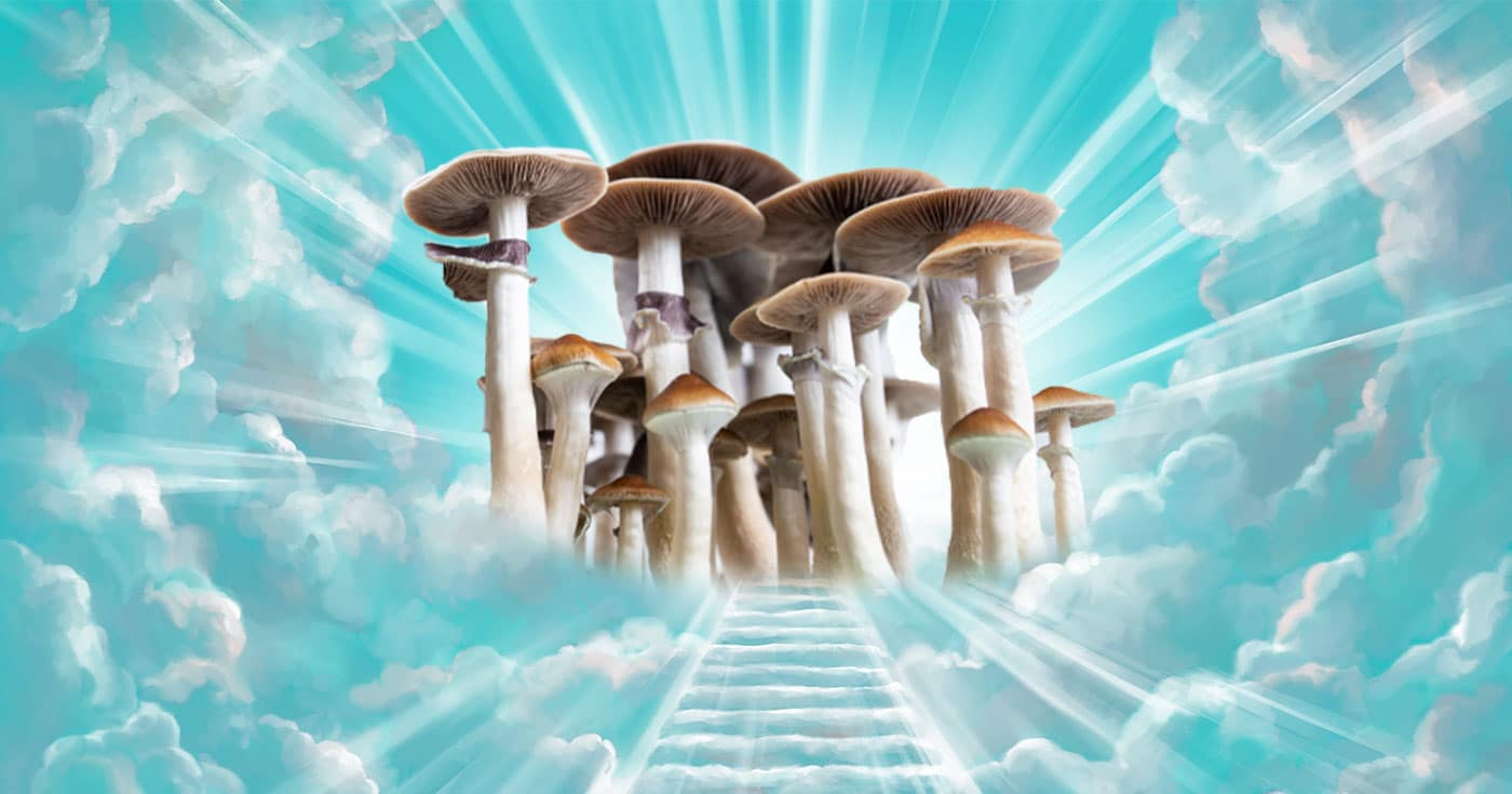 DoubleBlind: Image of stairway to heaven with psilocybin mushrooms at the top. In this article, DoubleBlind explores The Divine Assembly, a psilocybin church started by Steve Urquhart, a former Latter-Day Saint Politician.