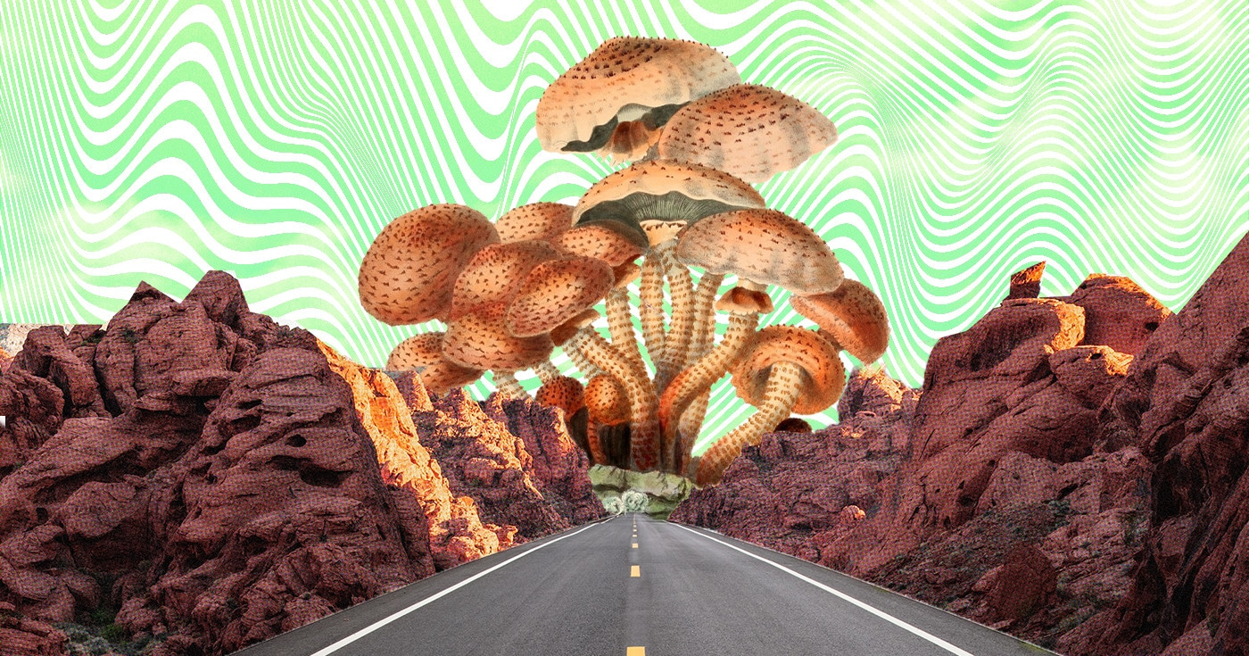 DoubleBlind: Collage of road driving towards mushrooms. In this article, DoubleBlind explores the campaigns in different jurisdictions dedicated to decriminalizing psychedelics and other drugs.