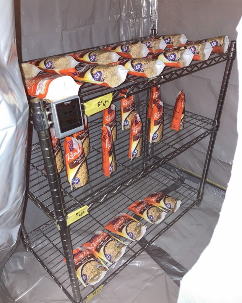 Image of wire racks holding inoculated bags of Uncle Ben's brown rice.