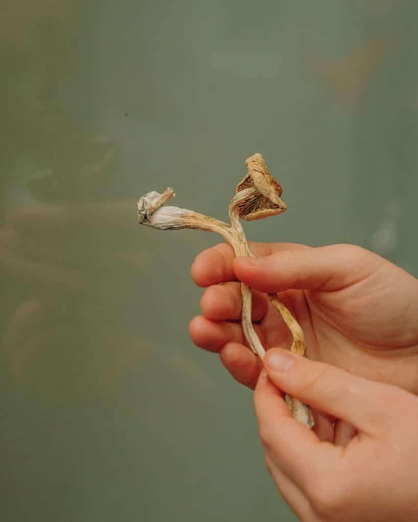hands holding shrooms